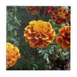 Maravillas anaranjadas azulejos