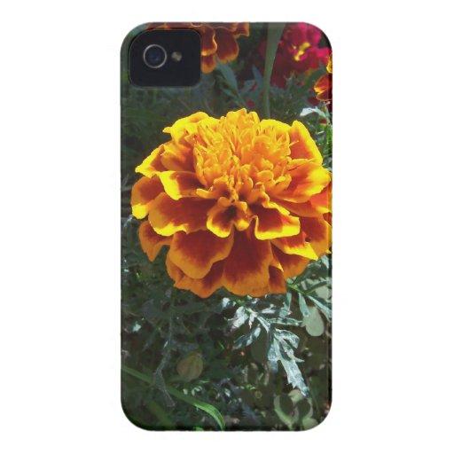 Maravillas anaranjadas Case-Mate iPhone 4 carcasa