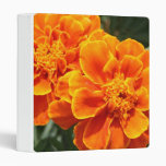 Maravillas anaranjadas florecientes