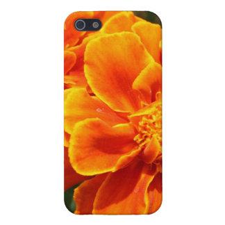 Maravillas anaranjadas florecientes iPhone 5 fundas