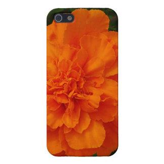 Maravillas anaranjadas iPhone 5 funda