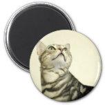 Marble Bengal Cat Fridge Magnet