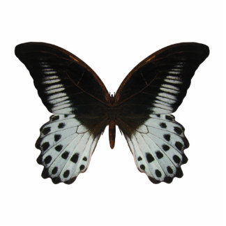 Marble Swallowtail Butterfly Cutout
