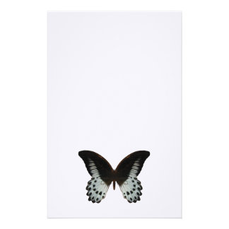 Marble Swallowtail Butterfly Stationery