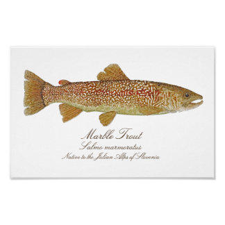 Marble Trout Artwork Poster