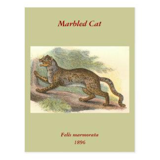 Marbled Cat, Felis marmorata Postcard