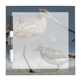 Marbled godwit (Limosa fedoa), Little St Simon's Dry-Erase Board