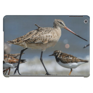 Marbled godwit (Limosa fedoa), Little St Simon's iPad Air Covers