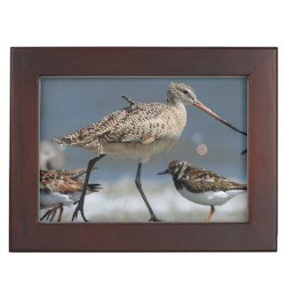 Marbled godwit (Limosa fedoa), Little St Simon's Memory Box