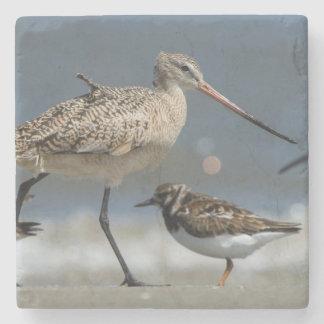 Marbled godwit (Limosa fedoa), Little St Simon's Stone Coaster