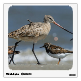 Marbled godwit (Limosa fedoa), Little St Simon's Wall Decal