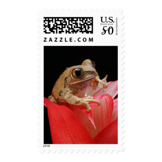 Marbled Reed Frog in Red Flower Nature Stamp