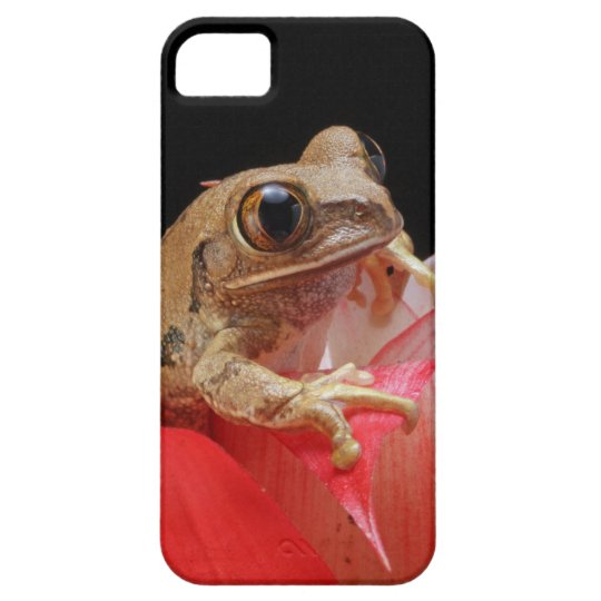 Marbled Reed Frog iPhone SE/5/5s Case