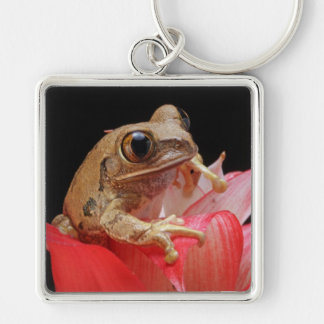 Marbled Reed Frog Key Chain