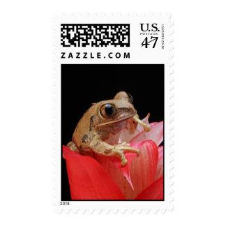 Marbled Reed Frog Postage