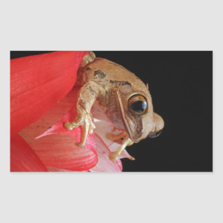 Marbled Reed Frog Stickers
