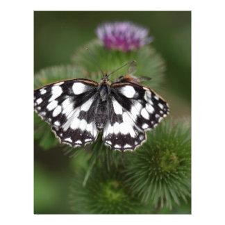 Marbled White, Melanargia galathea Letterhead