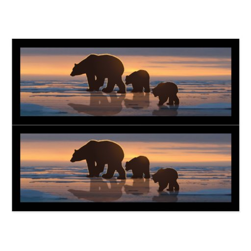 Marcadores de libro de la familia del oso polar tarjeta postal