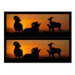 Marcadores de libro de las ovejas del Big Horn Postal