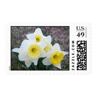 March Daffodils Stamp