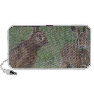 March Hares Travel Speaker