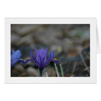 March Iris Card
