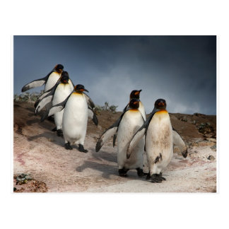 March of the Penguins Postcard