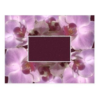 Marco bonito de la flor tarjeta postal