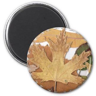 Marco del mosaico de las hojas de otoño imanes