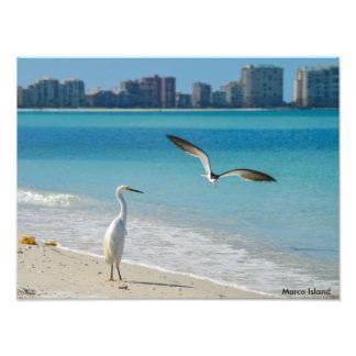 Marco Island Photo Print