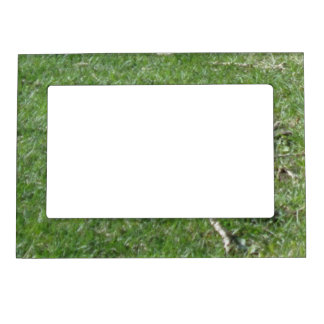 Marco magnético de la foto de la hierba foto de imanes