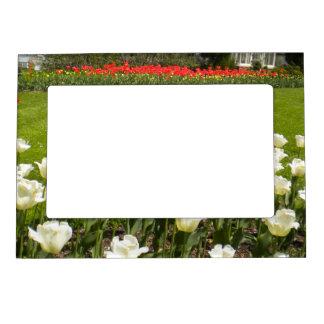 Marco magnético de la foto del jardín del tulipán foto de imanes