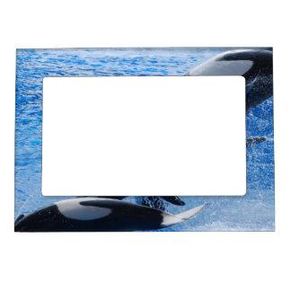 marco magnético del marco - modificado para requis marcos magneticos de fotos