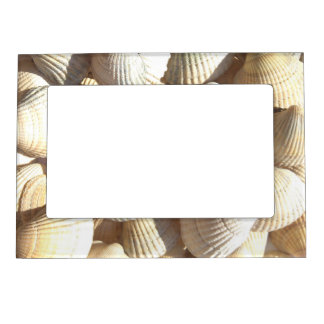 Marco magnético del verano de los Seashells Marcos Magnéticos Para Fotos