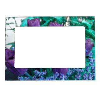 Marco púrpura del imán de los tulipanes foto de imanes