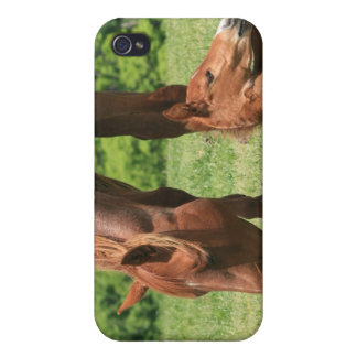 Mare and Colt iPhone Case iPhone 4/4S Covers
