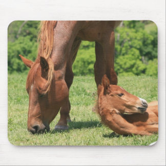 Mare and Colt Mouse Pad