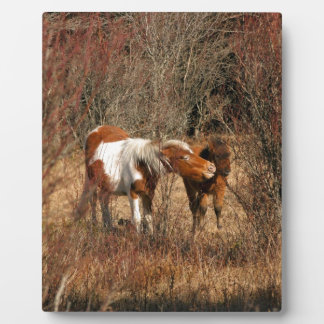 Mare and Foal Display Plaques