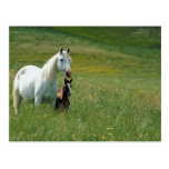 Mare and Foal in Tall Grass Postcard