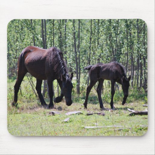 Mare and foal perfectly in sync mouse pad