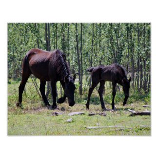 Mare and foal perfectly in sync poster
