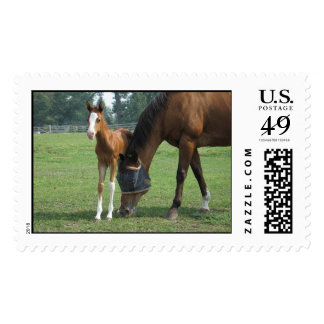 Mare and Foal Postage Stamp