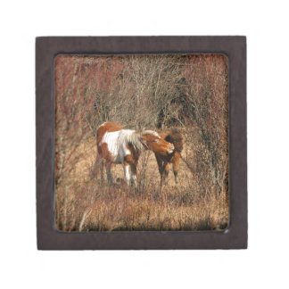 Mare and Foal Premium Jewelry Boxes