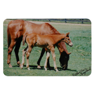 Mare and Foal Premium Magnet