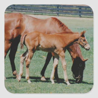 Mare and Foal Sticker