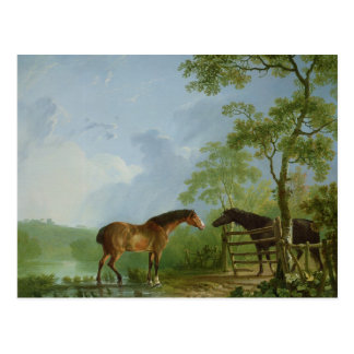 Mare and Stallion in a Landscape Postcard