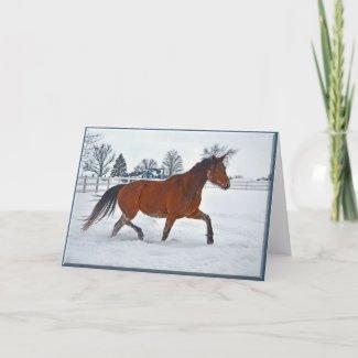 Mare Christmas Card