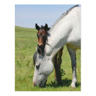 Mare Grazing with Colt Postcard
