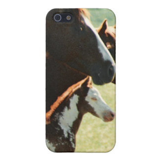 Mare Horses and Foal Picture Cover For iPhone SE/5/5s
