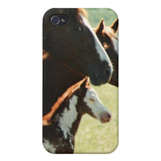 Mare Horses and Foal Picture Case For iPhone 4